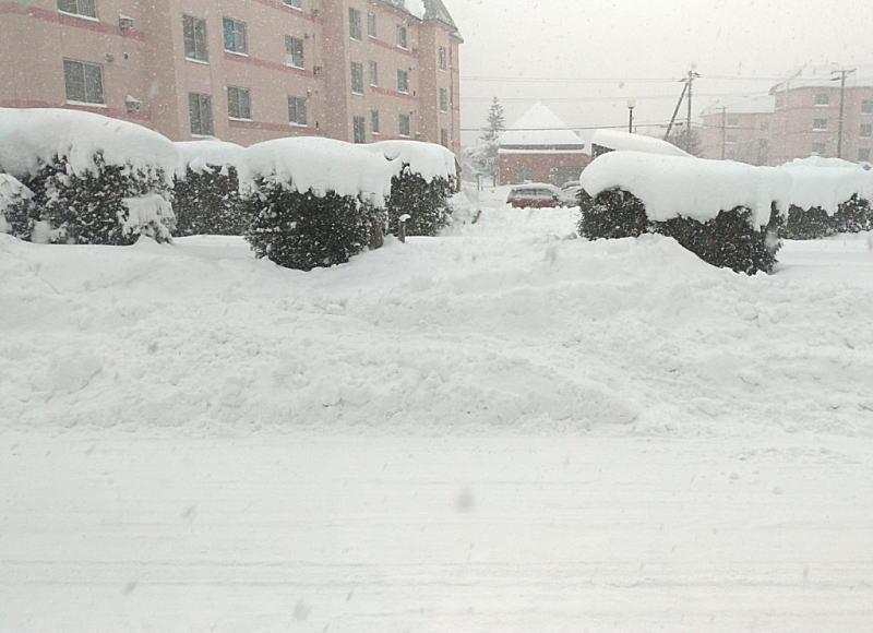 当院向かいにある緑道公園の冬の様子&堆雪の風景